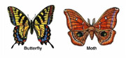 Adult Butterfly and Moth. Artwork by Dale Crawford. (click to get large image).